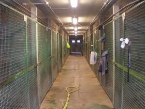 Couloir central de la pension pour chiens