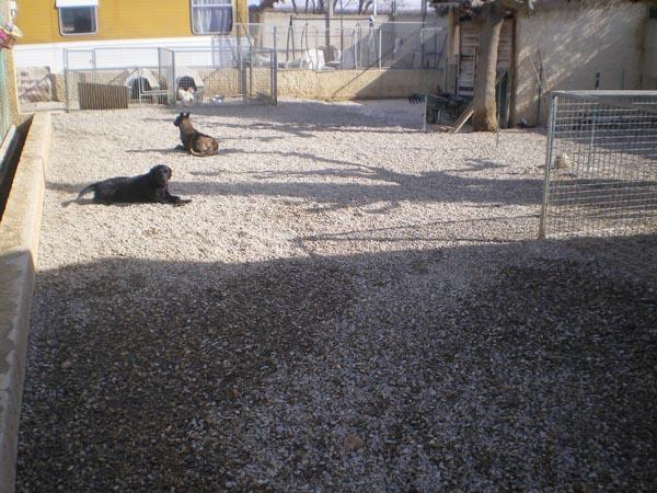 espaces cani cat maraussan pension chiens et chats maraussan 34 h rault entre b ziers. Black Bedroom Furniture Sets. Home Design Ideas