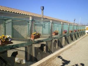 Bâtiment de la pension pour chiens